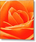 Detailed Close Up Of A Rose Metal Print
