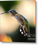 Determined Hummingbird Metal Print