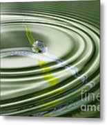 Dew Bead On The Blade Of Grass Metal Print