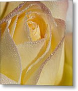 Dew Bejeweled Peace Rose Metal Print