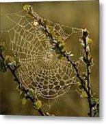 Dew Highlights An Orb-weaver Spiders Metal Print
