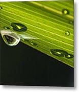 Dew On Leaf, Germany Metal Print