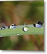 Dewdrops On Leaf Metal Print
