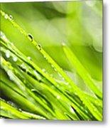 Dewy Green Grass  Metal Print