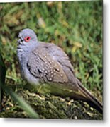 Diamond Dove Metal Print