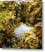 Diamonds In A Dragon Nest Metal Print
