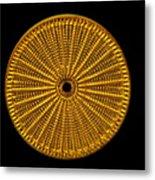 Diatom Alga, Arachnoidiscus Metal Print