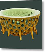 Diatom, Sem Metal Print by David Mccarthy
