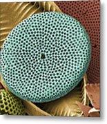 Diatoms, Sem Metal Print