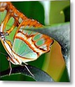 Dido Longwing Butterfly Metal Print