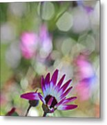 Different Metal Print by Heidi Smith