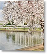 Digital Liquid - Cherry Blossoms Washington Dc 6 Metal Print by Metro DC Photography