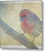 Digitally Painted Finch With Texture II Metal Print