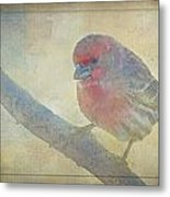 Digitally Painted Finch With Texture IIi Metal Print