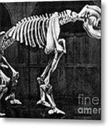 Diprotodon, Cenozoic Mammal Metal Print