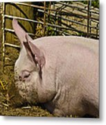 Dirty Piggy Metal Print