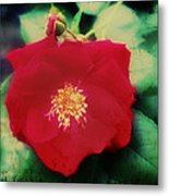 Dirty Rose Knows Metal Print by Bill Cannon