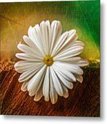 Disappearing Daisy Metal Print