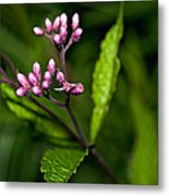 Ditch Mystery Metal Print