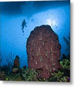 Diver And Barrel Sponge, Belize Metal Print
