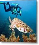 Diver And Cuttlefish Metal Print