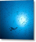 Diver And School Of Fish In Blue Water Metal Print