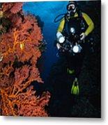 Diver And Sea Fans, Fiji Metal Print