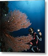 Diver By Sea Fans, Indonesia Metal Print