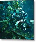 Diver Feeding Fish Metal Print