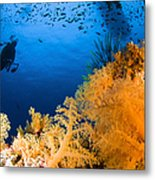 Diver Hovering Over Soft Coral Reef Metal Print