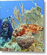 Diver Looks At Scorpionfish Metal Print