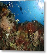 Diver Over Reef Seascape, Indonesia Metal Print
