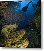 Diver Swims Over A Reef, Belize Metal Print