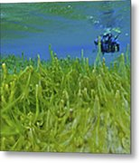 Diver With Fluorescent Green Algae Metal Print