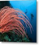 Divers And Whip Coral Metal Print