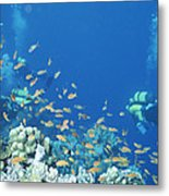 Divers Enjoy The Beauty Of The Reefs Metal Print