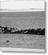 Diving Coney Island In Black And White Metal Print