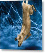 Diving Dog 2 Metal Print