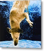 Diving Dog 3 Metal Print