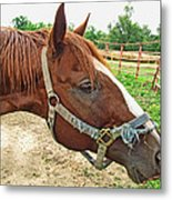 Do I Have Hay On My Nose Metal Print