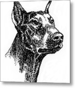 Doberman-pincher-portrait Metal Print