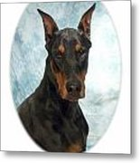 Doberman Pinscher 100  Metal Print