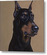 Doberman Pinscher Metal Print by Patricia Ivy