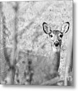 Doe A Deer. Metal Print