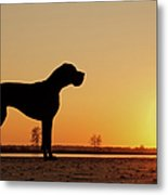 Dog Against Setting Sun Metal Print