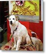 Dog At Carnival Metal Print