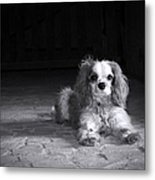 Dog Black And White Metal Print by Jane Rix