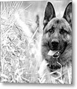 Dog In Field Metal Print