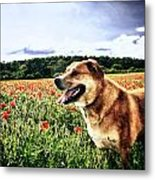 Dog In The Poppy Field Metal Print