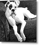 Dog On Couch Metal Print